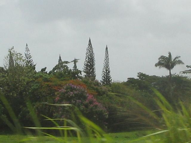File:Flore Lamentin Guadeloupe.jpg