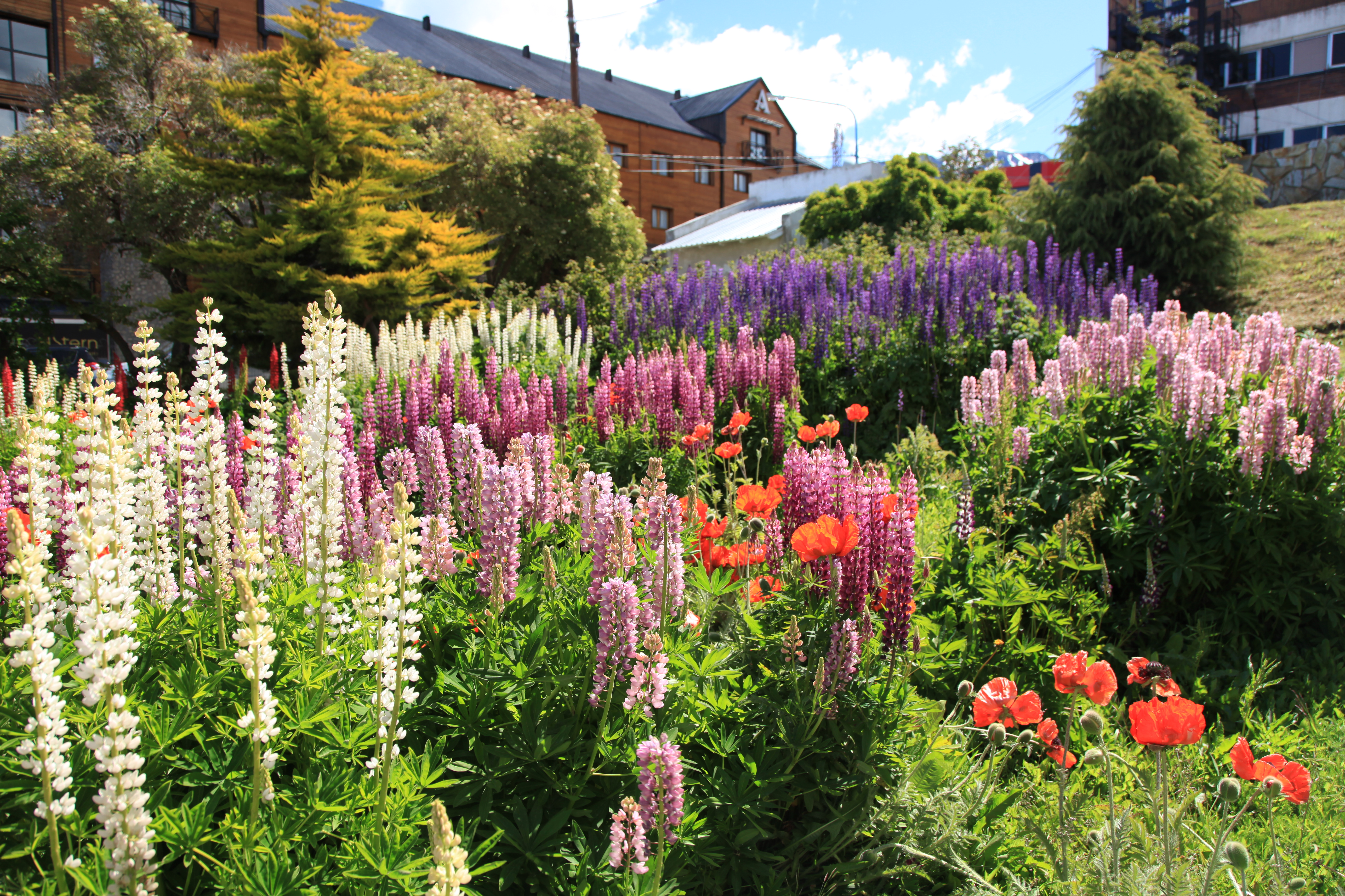 English Cottage House File Flower Garden In Ushuaia 5543010755 Jpg Wikimedia