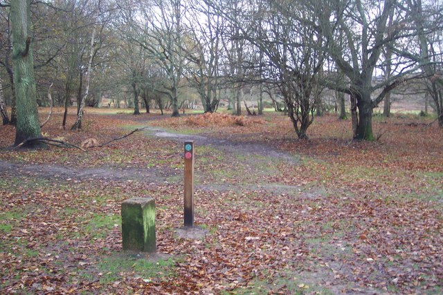 Footpaths in Hothfield Common - geograph.org.uk - 1600963
