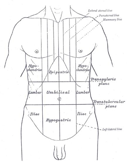Plano intertubercular - Wikiwand