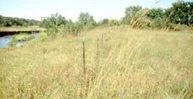 Indian Village Site Witrock Area.jpg