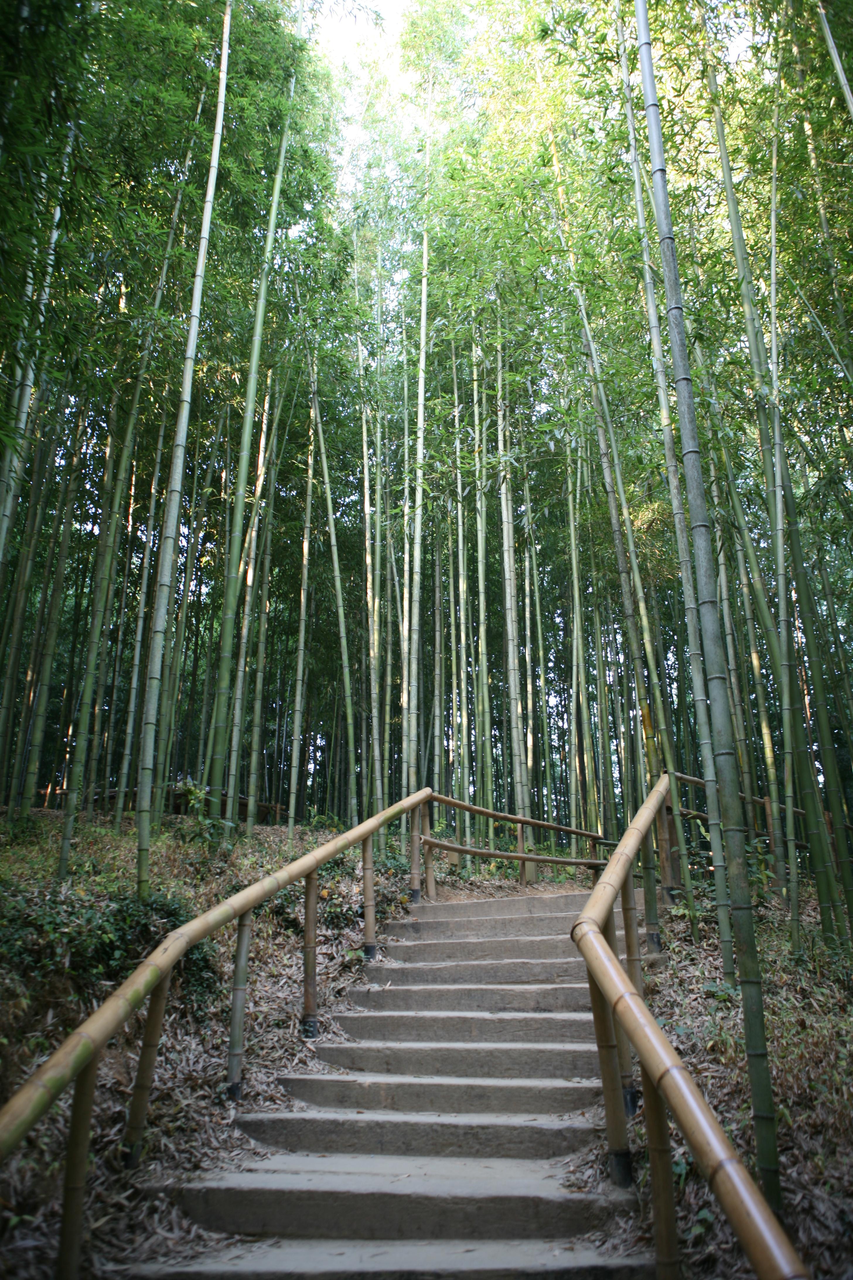 file korea damyang juknogwon bamboo garden. Black Bedroom Furniture Sets. Home Design Ideas