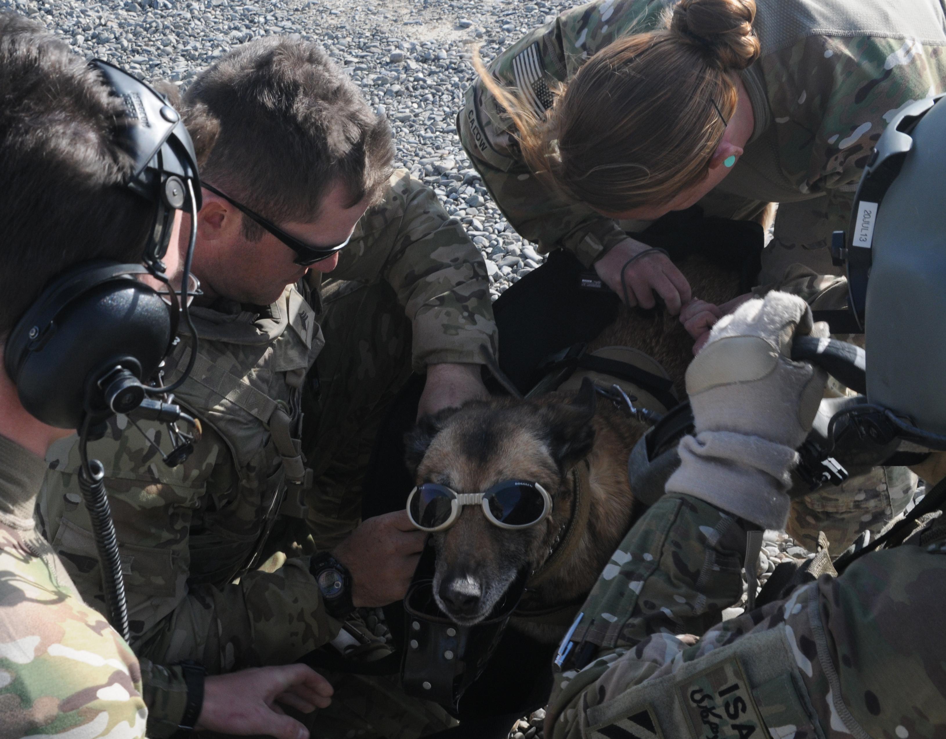 H Dog Training