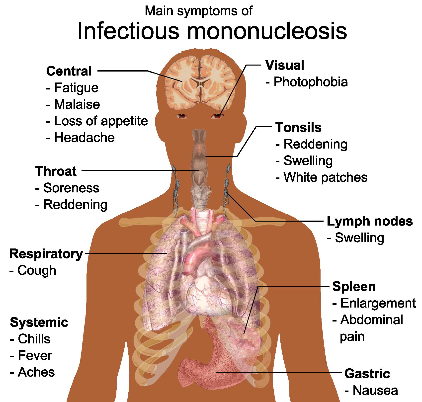 fluoranthen symptome beim menschen