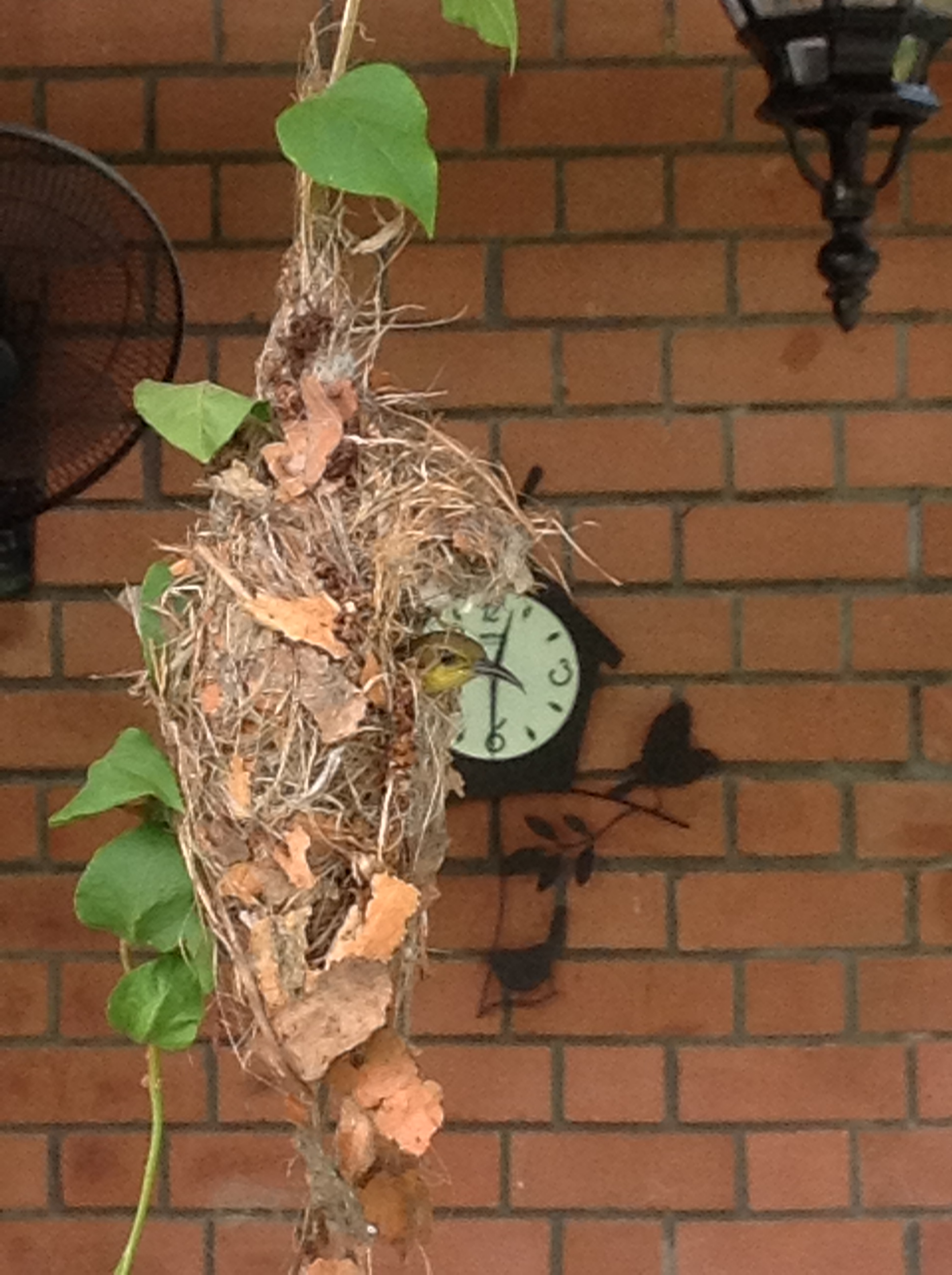 nest meaning and definition