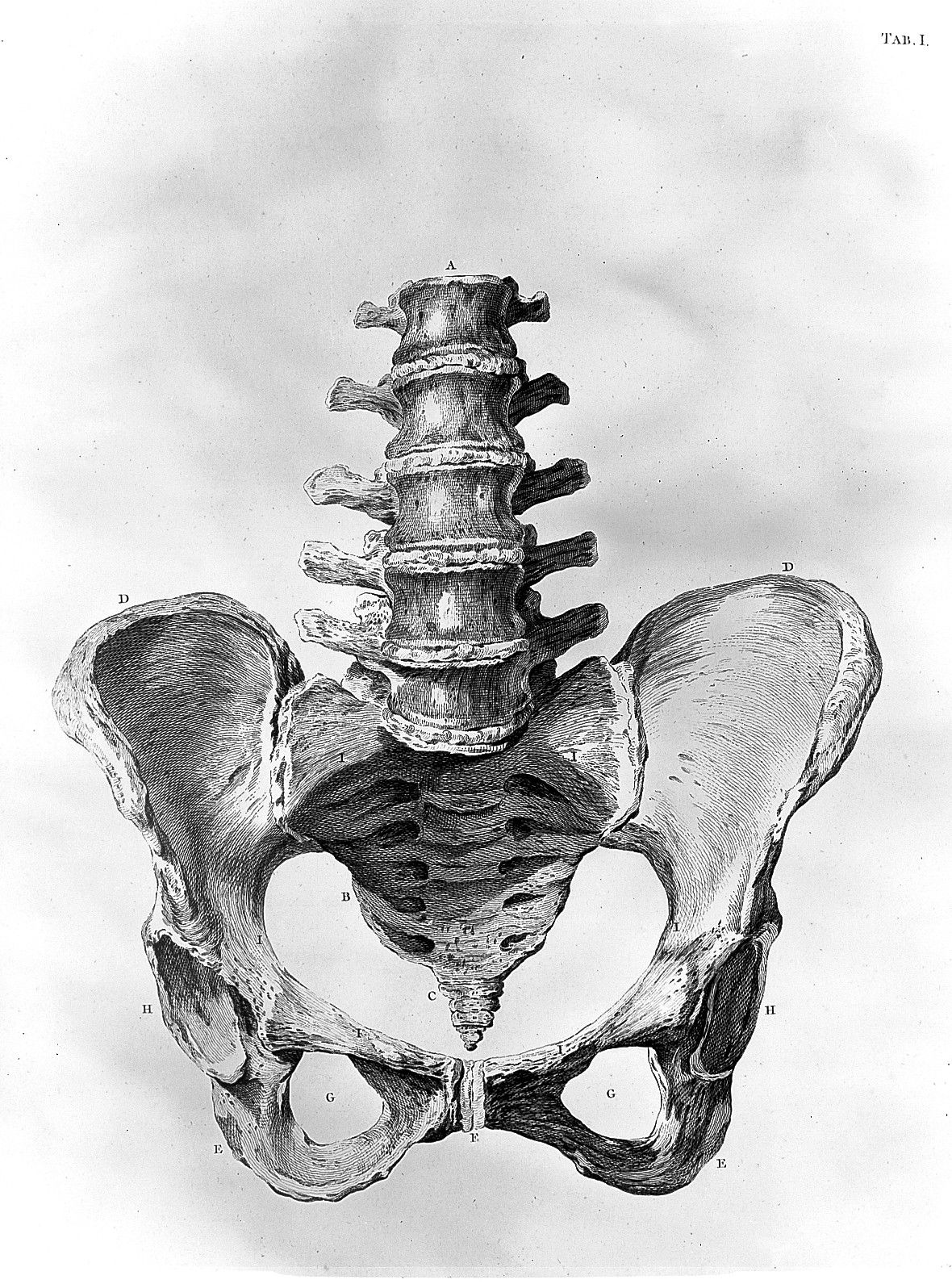 Filepelvis And Base Of Spine Wellcome L0013506g Wikimedia Commons