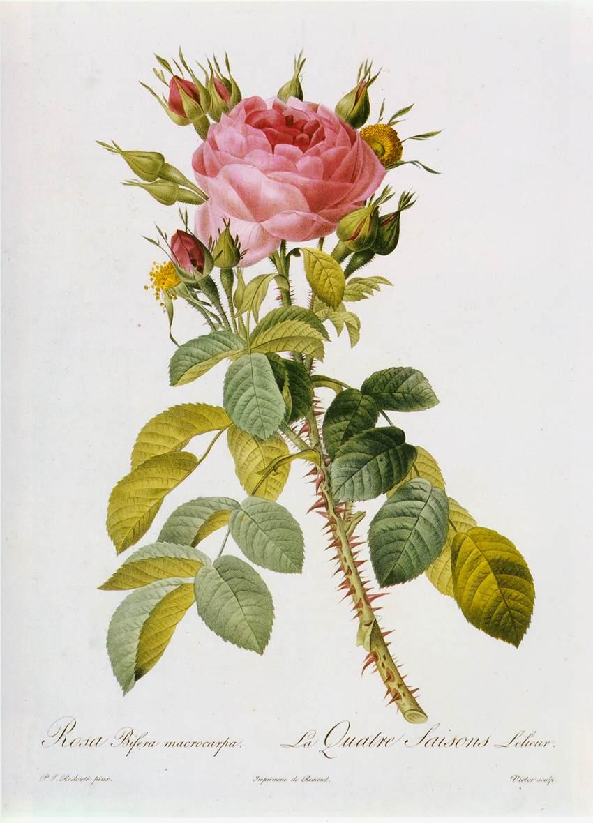 """Даже одна роза , вставленная в овальную рамку, будет элегантным...  Continue reading  """"Вышивка крестом - схема  """"Роза."""