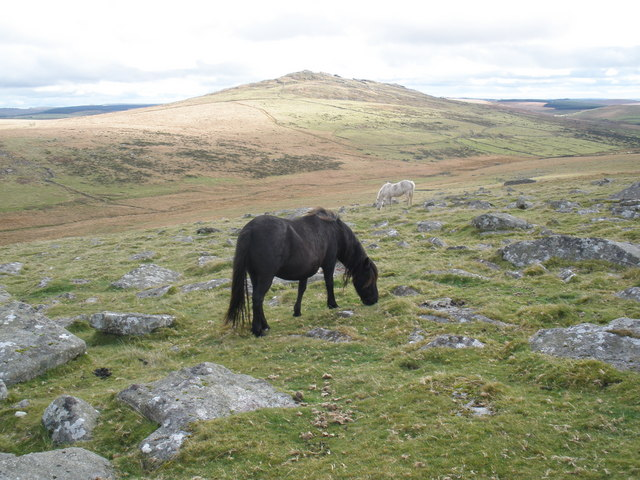 Ponies, grazing on Showery Tor - geograph.org.uk - 1006082