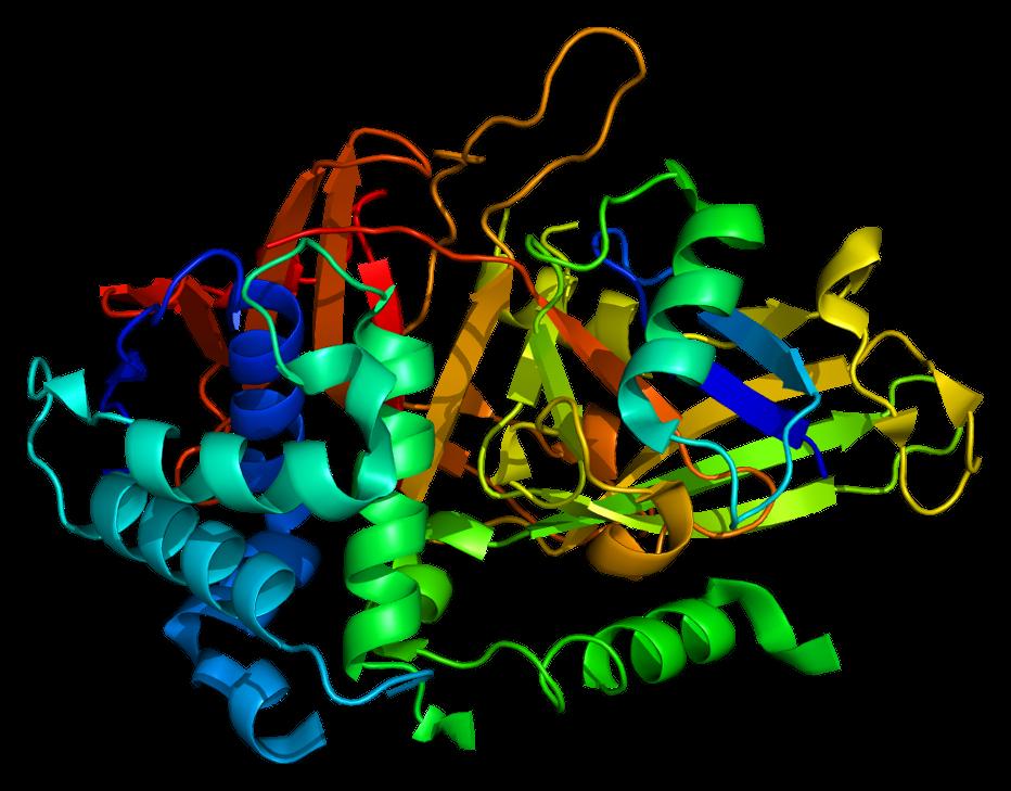 USP2 - Wikipedia  Protein