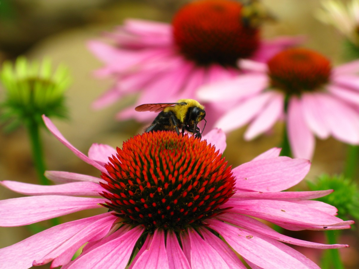 bumble bee and flower relationship