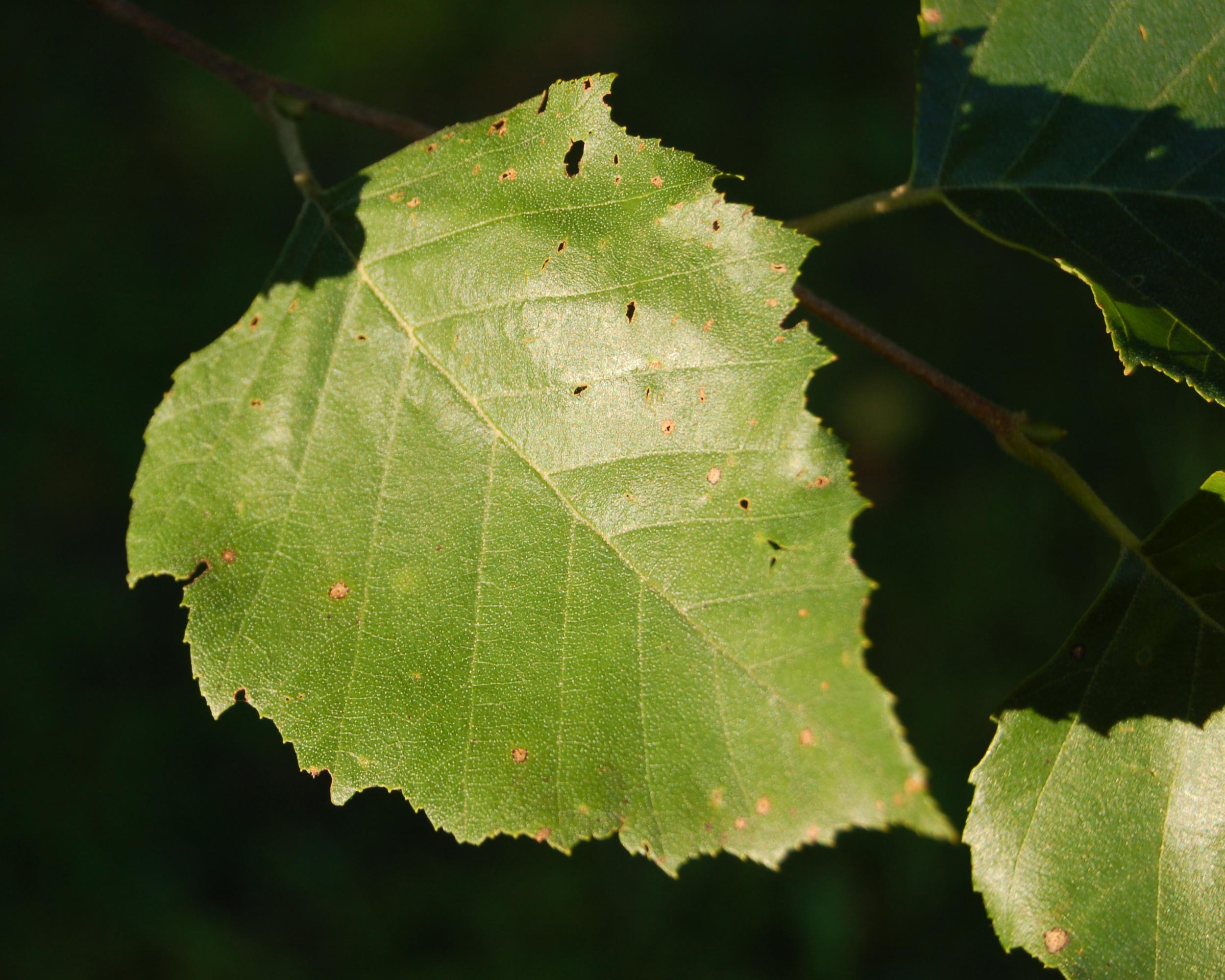 leaf river milfs dating site Bahasa indonesia - indonesian čeština - czech dansk - danish deutsch - german english (united states) español - spanish español (latinoamérica.