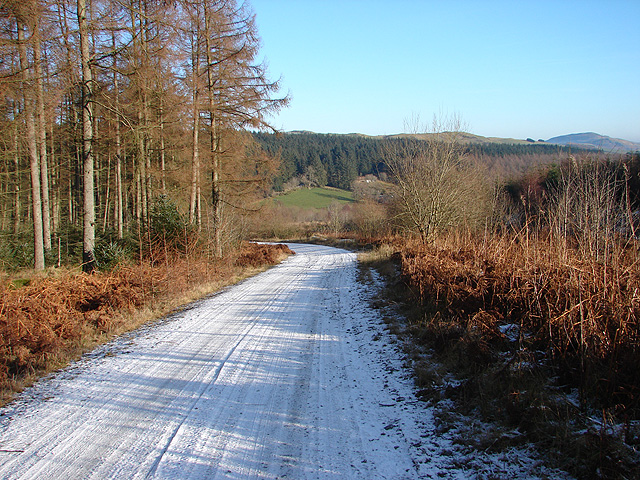 Road in Hafren Forest - geograph.org.uk - 1113862