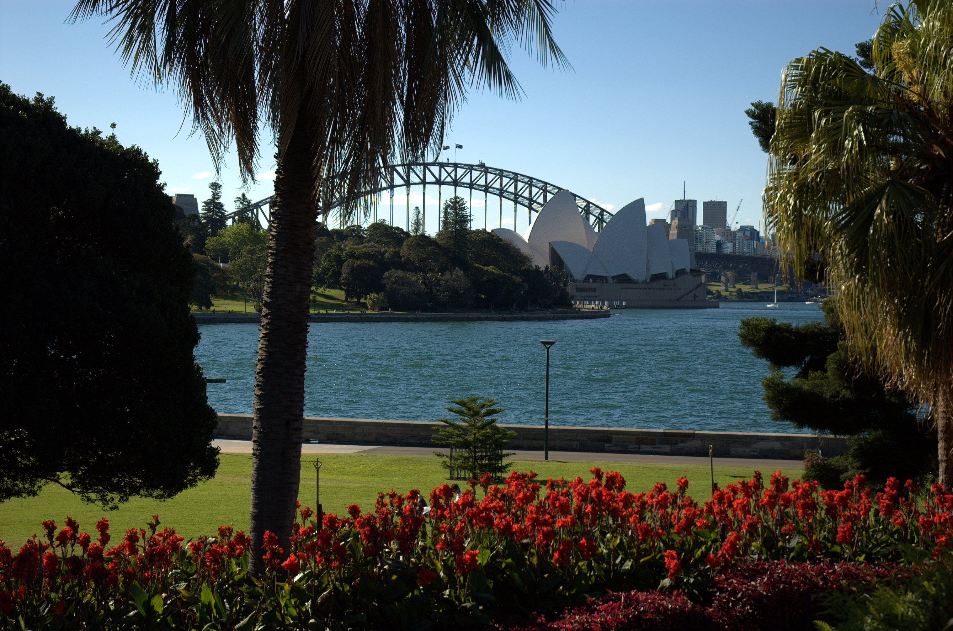 File:Sydney Harbour Bridge And Opera House From Botanic Gardens