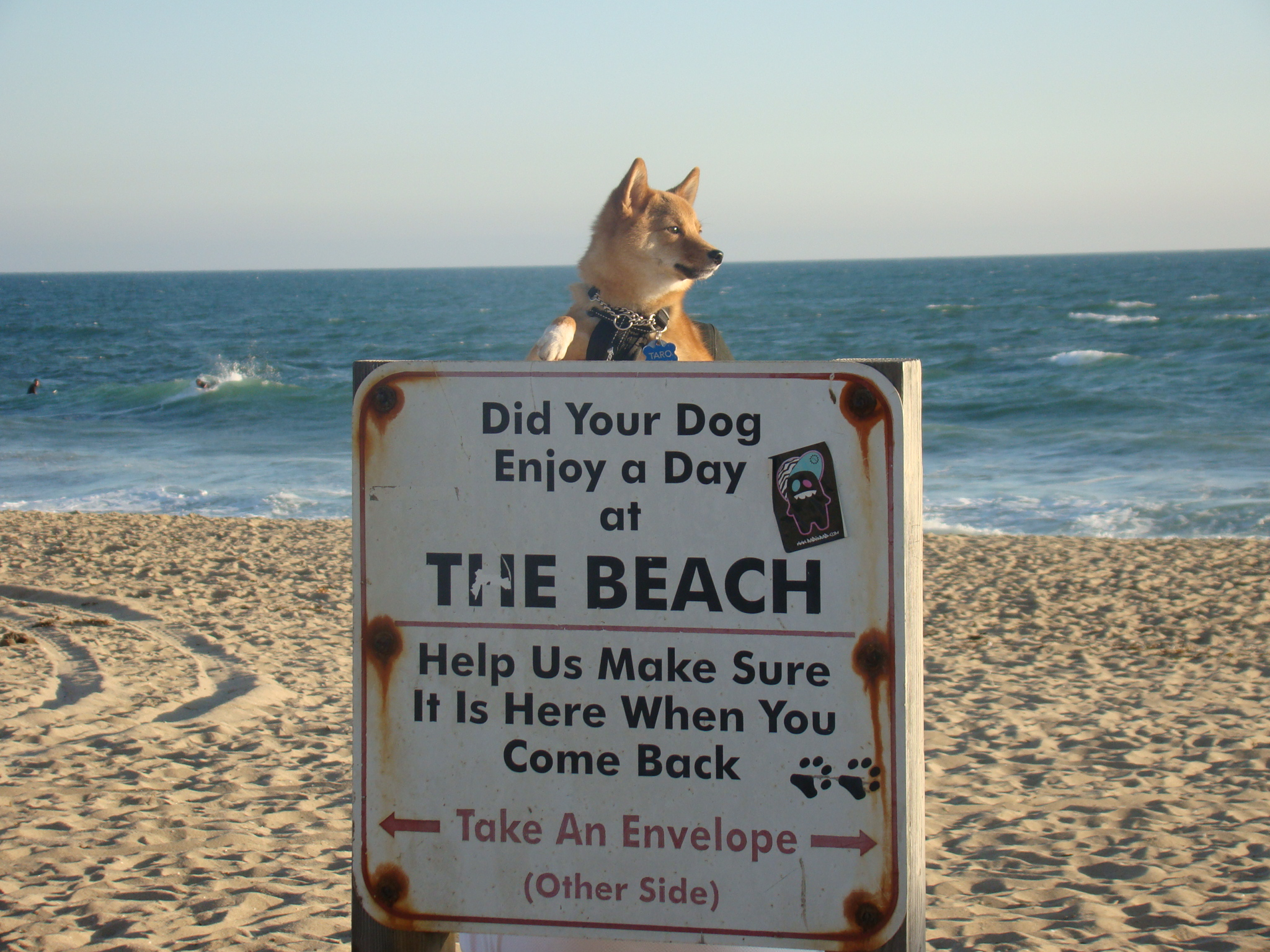 Dog Friendly Beaches St Petersburg Fl
