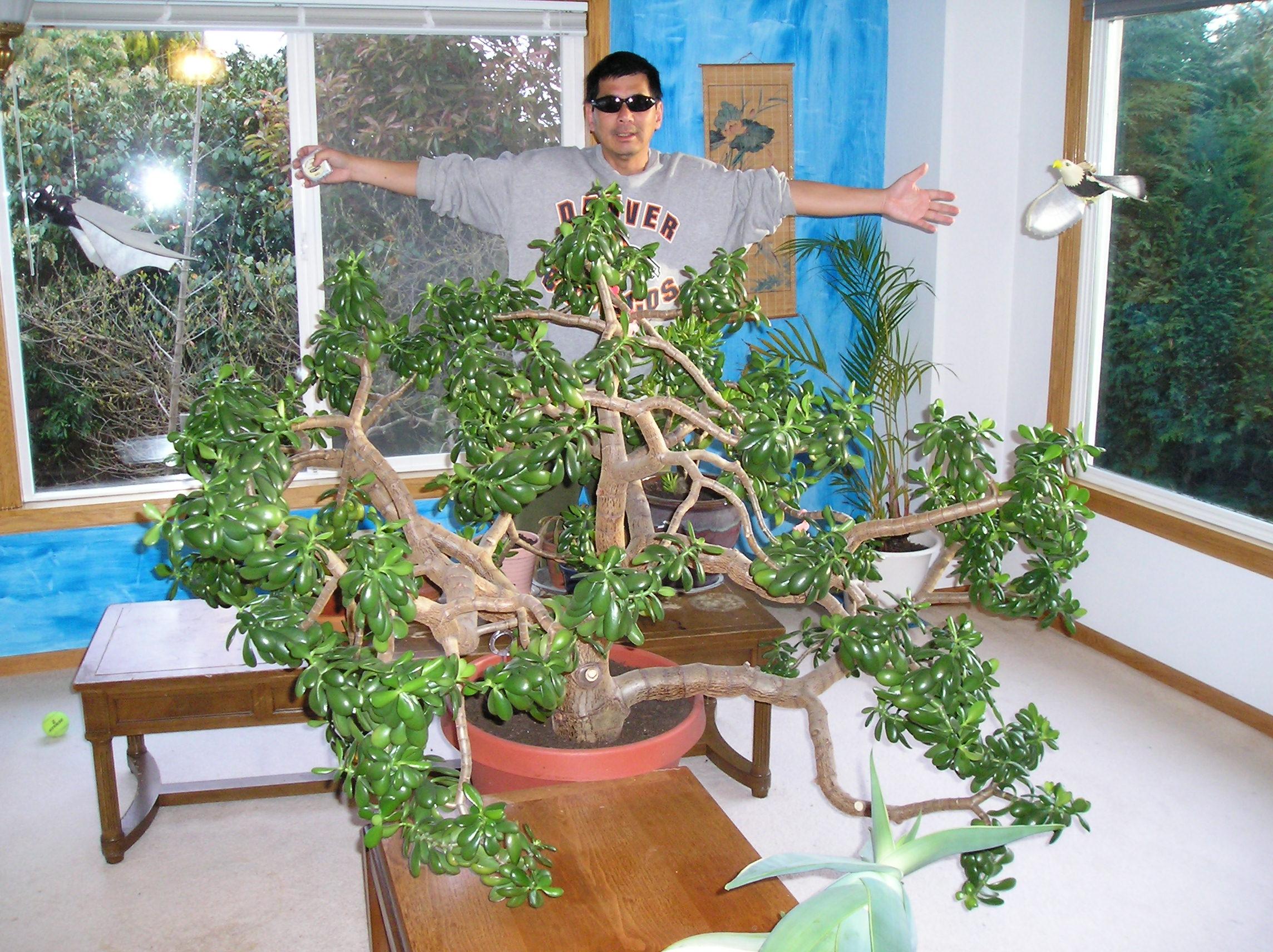 Lucky Plants For Front Door