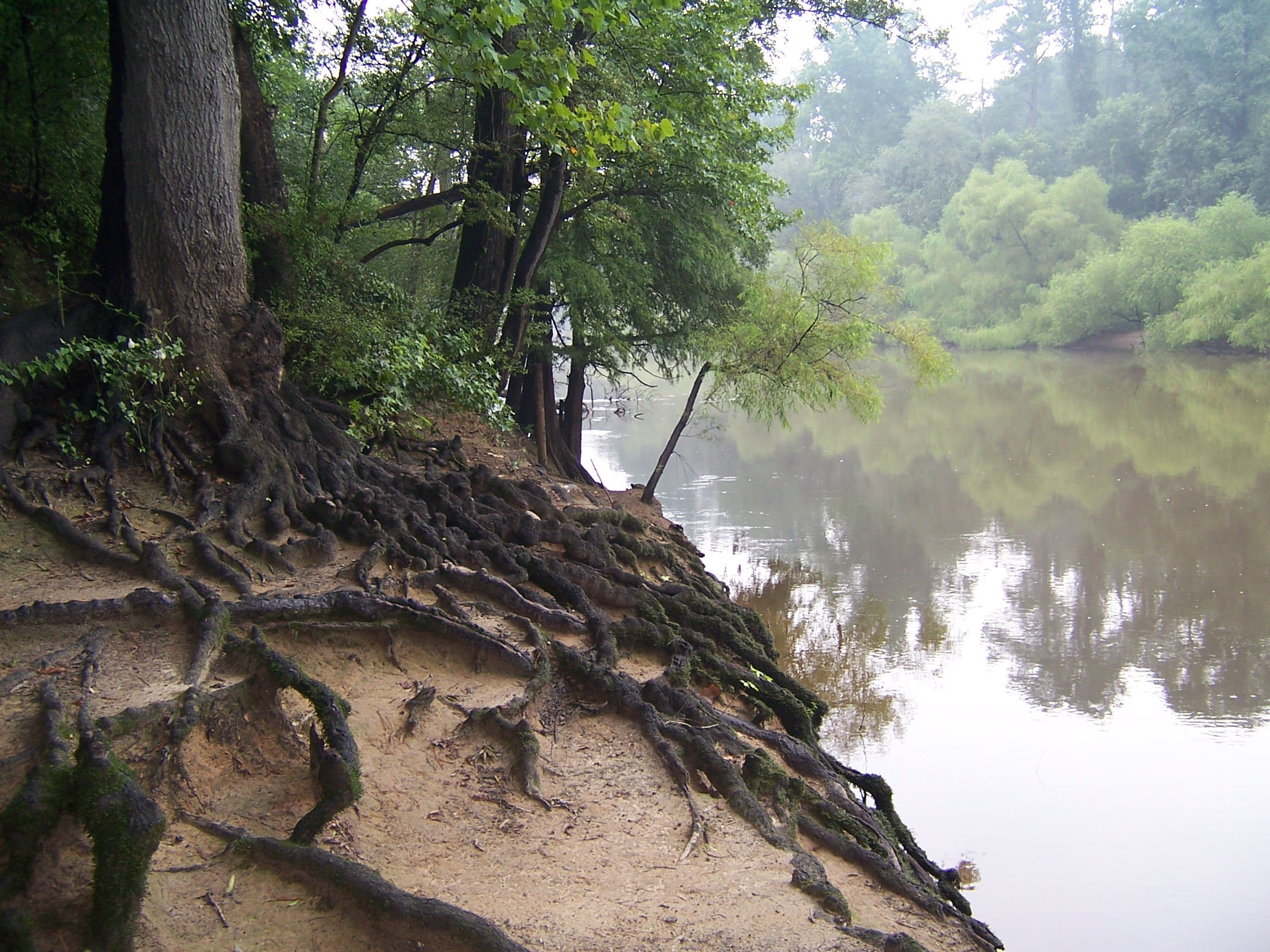http://upload.wikimedia.org/wikipedia/commons/4/4d/Tree_Roots_at_Riverside.jpg