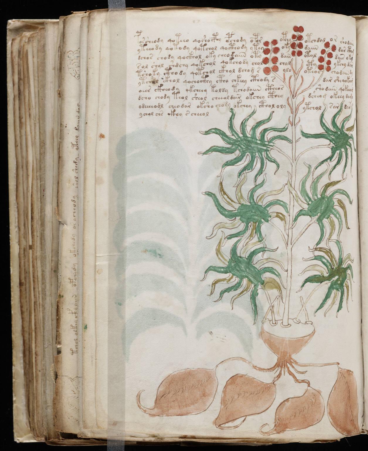 Voynich Manuscript %28168%29 ヴォイニッチ手稿(写本) どの言語にも属さない謎の文字!