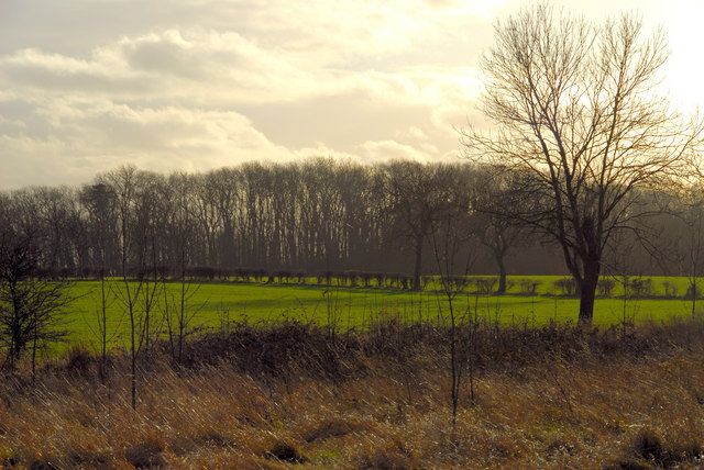 Weelsby woods - geograph.org.uk - 803565