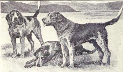 Welsh Hound from 1915