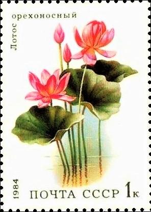File:Почтовая марка СССР № 5501. 1984. Водные растения.jpg
