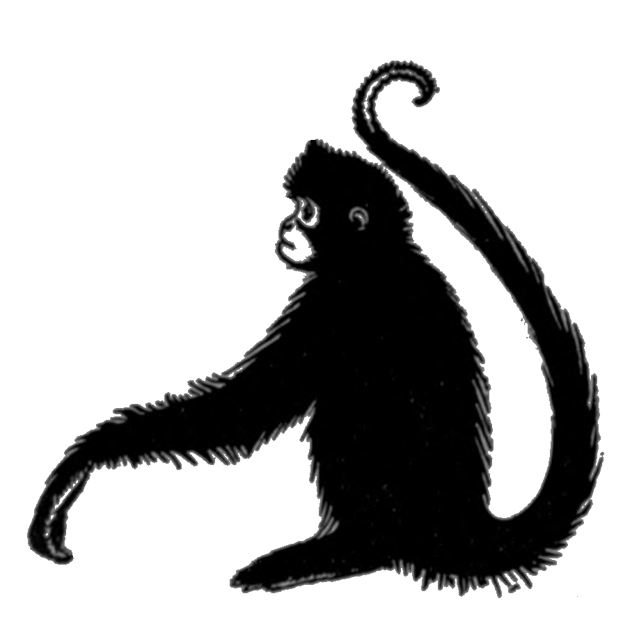 File Com V1 D406 Spider Monkey Png Wikimedia Commons