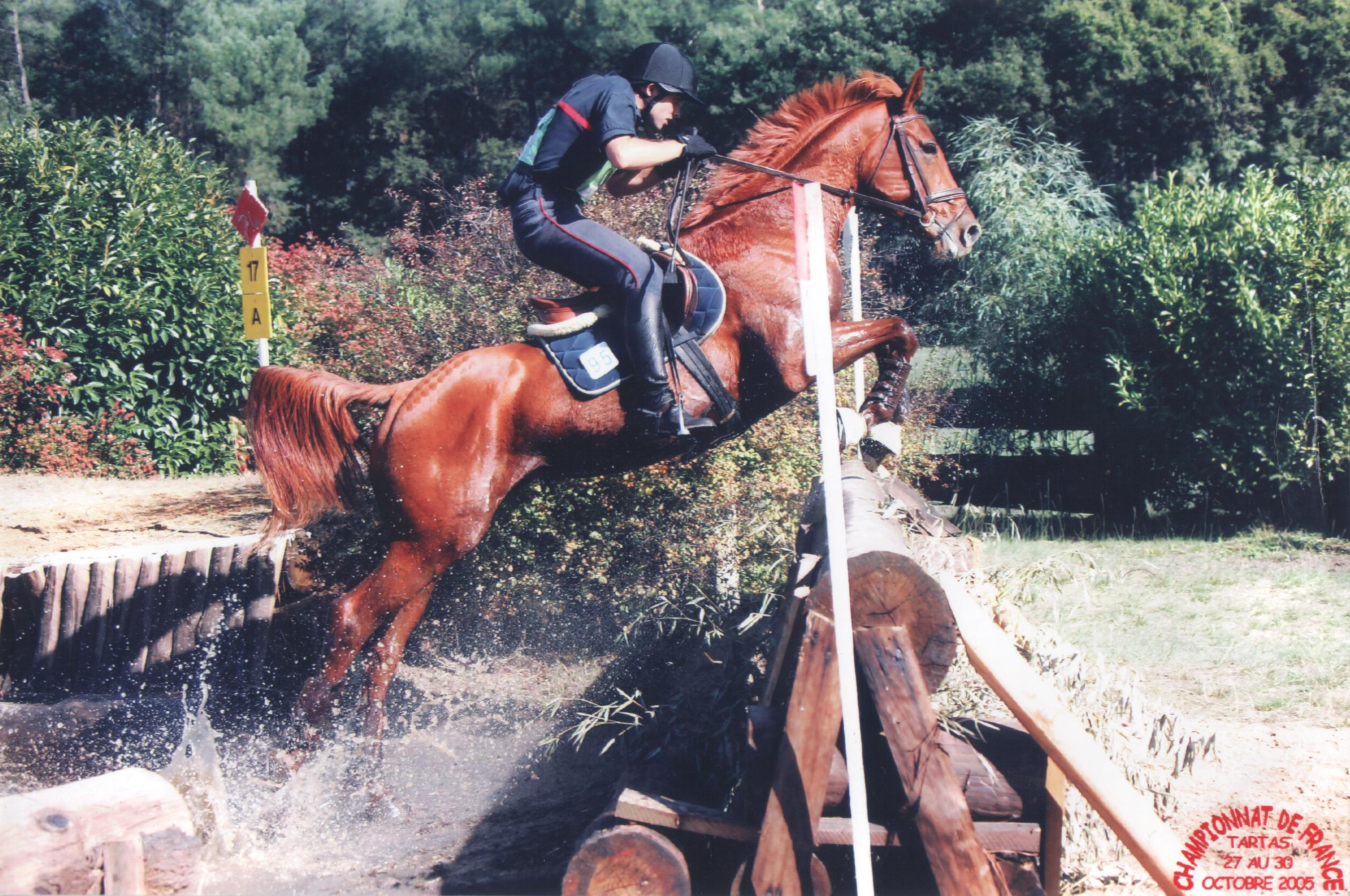 Horse Jumping Obstacles Wikiwand