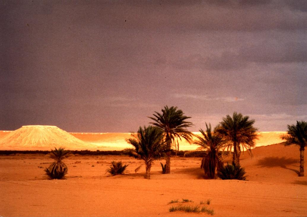 https://upload.wikimedia.org/wikipedia/commons/4/4e/Duna_dorada_en_Argelia_-_Guadalupe_Cervilla.jpg