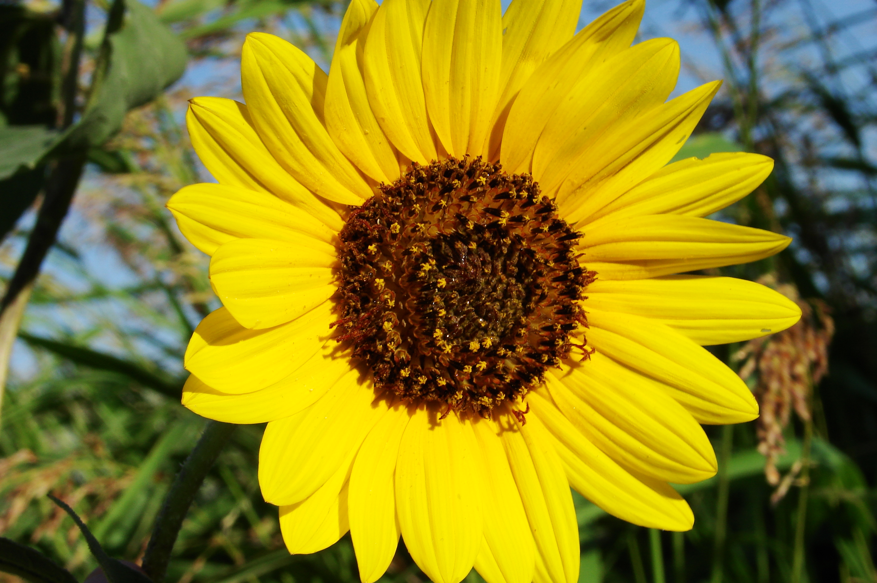 sun flowers and flower - photo #22