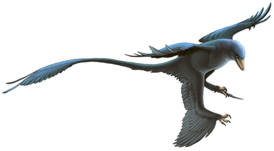 Image result for Microraptor