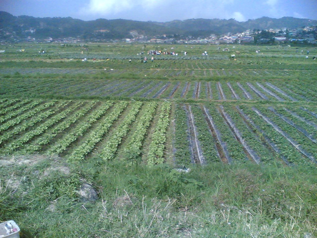 Pictures of Valleys in Trinidad la Trinidad Valley