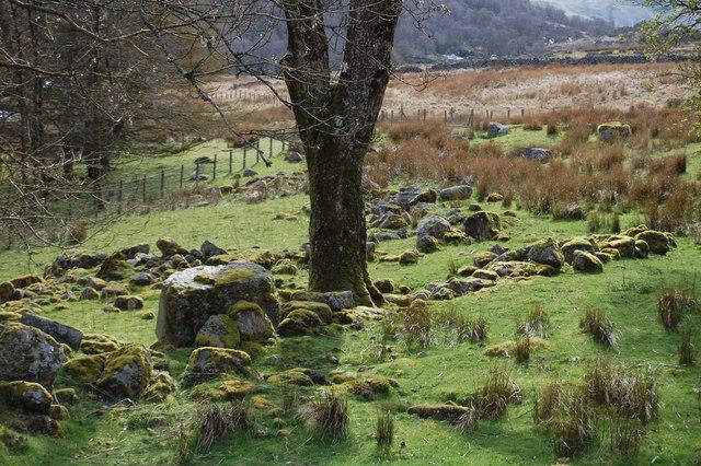 Llanycil - Mossy Woodland by Llyn Celyn - geograph.org.uk - 1612254