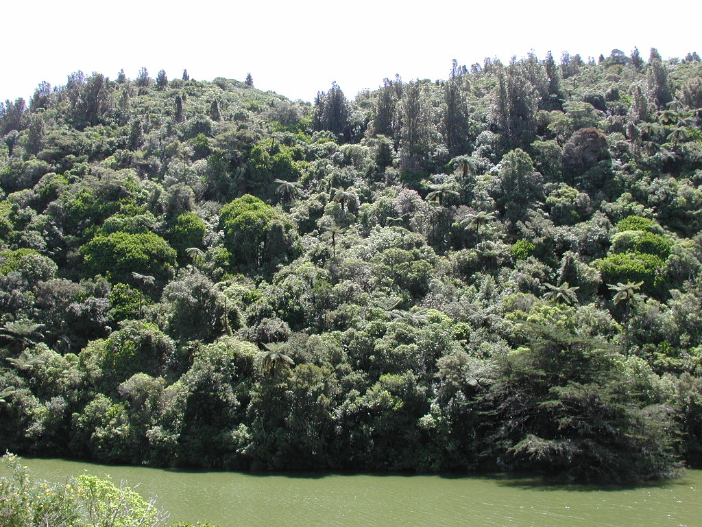 http://upload.wikimedia.org/wikipedia/commons/4/4e/Native_bush_along_lower_lake_in_Karori_Wildlife_Sanctuary.jpg