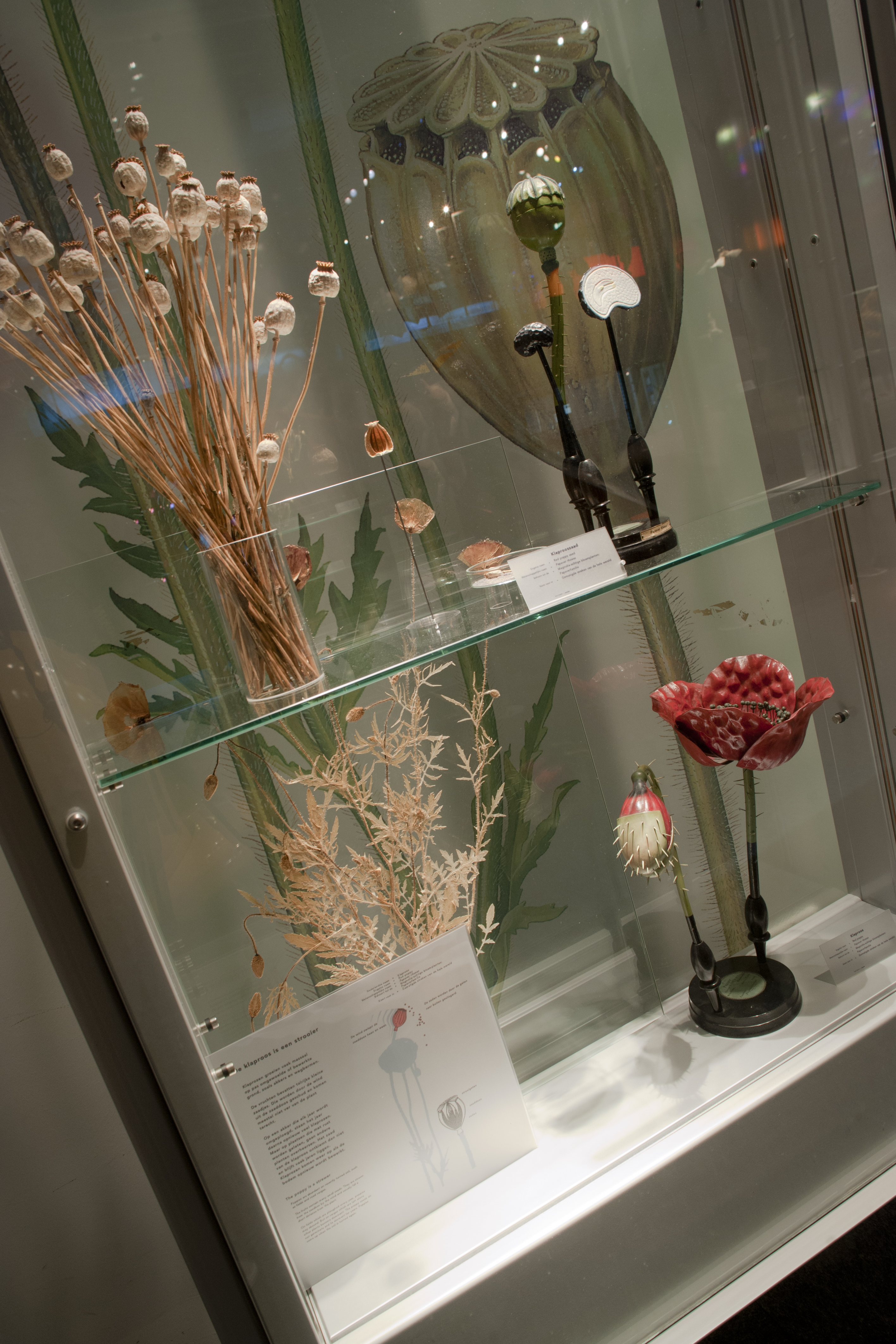 Filenaturalis Biodiversity Center Museum Exhibition Life 07