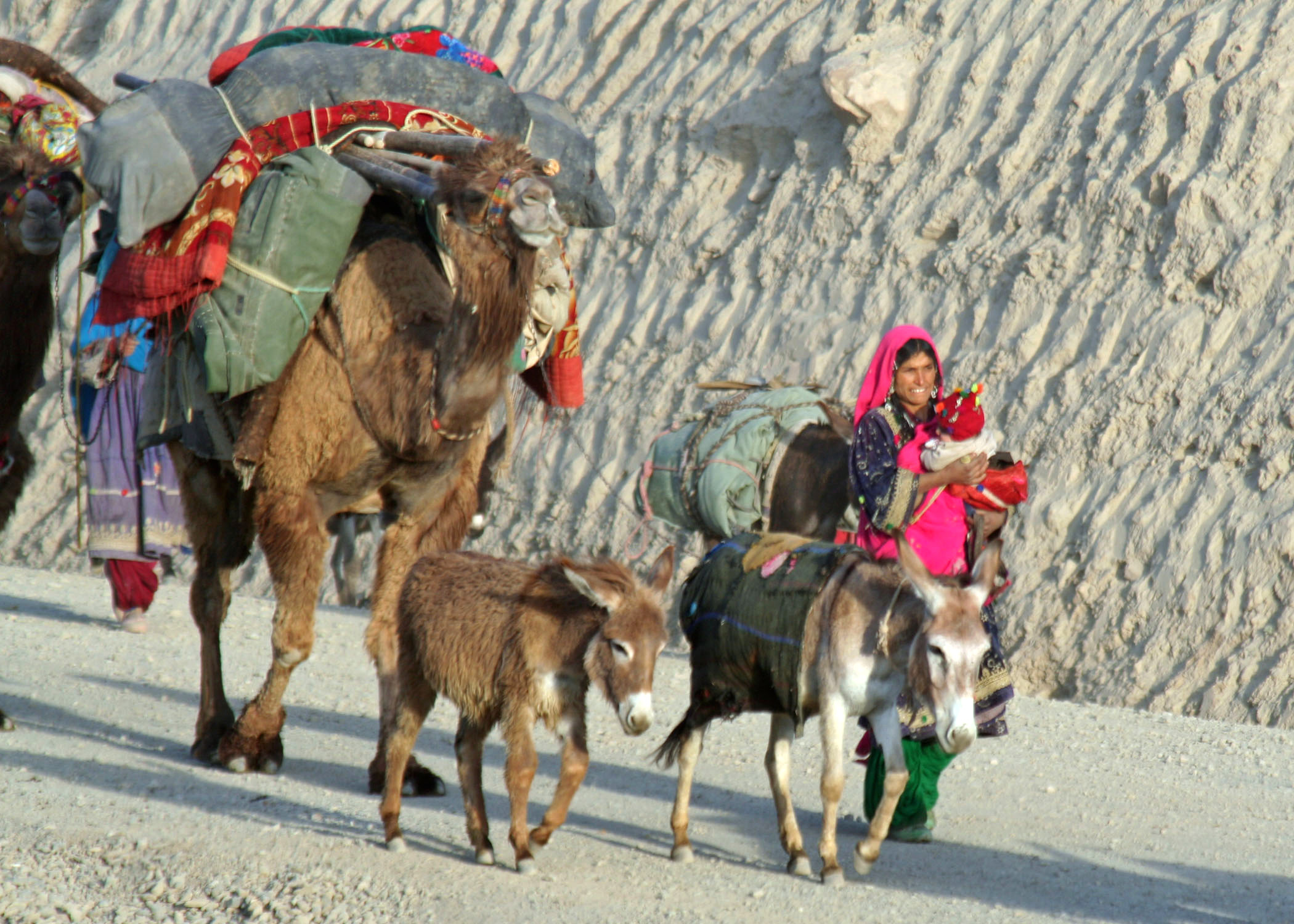 English: The nomadic Kuchi people migrate thro...