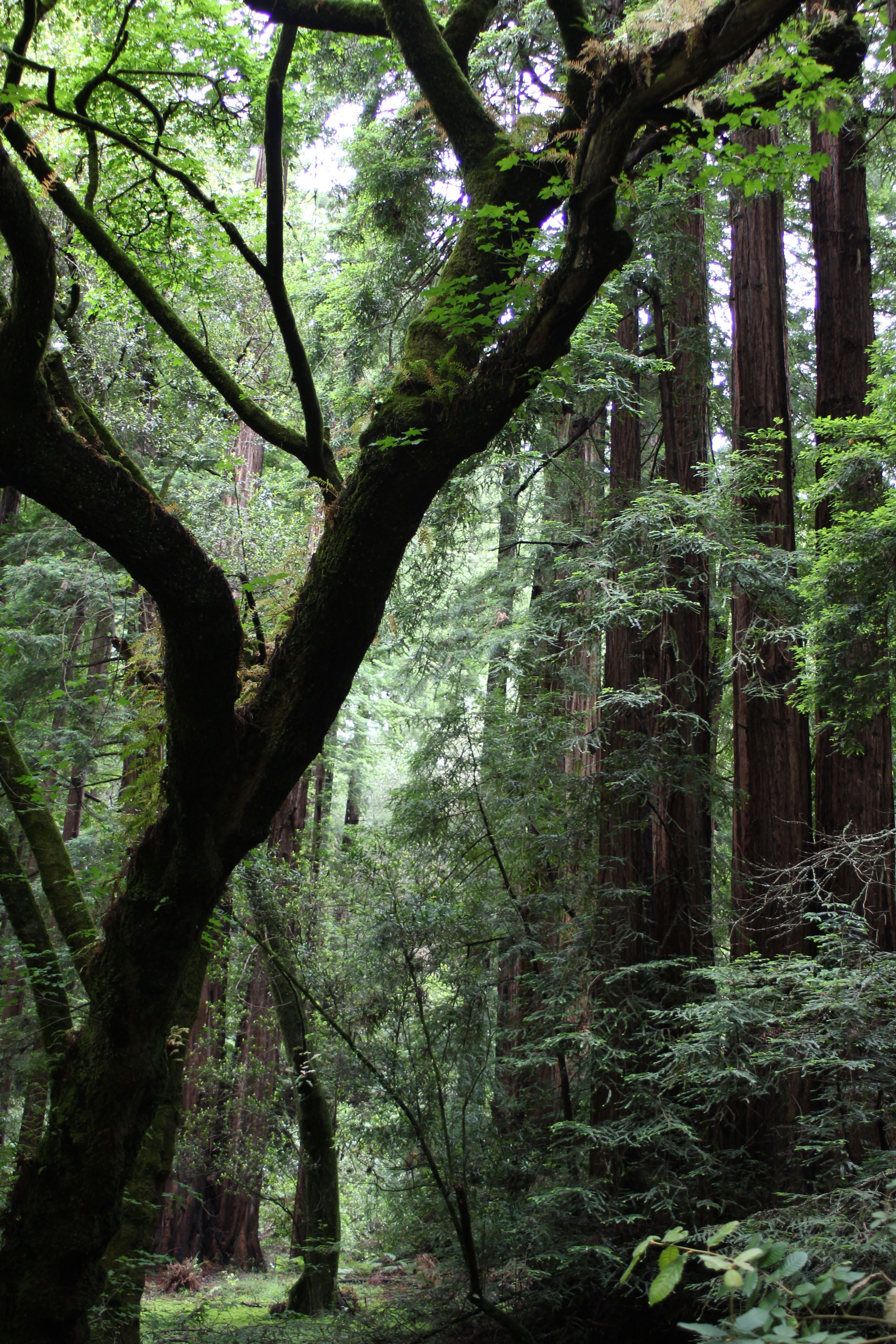 muir woods national monument A slow walk through almost any landscape in golden gate national recreation area during the rainy season can produce a world of wonder at your feet, but muir woods national monument highlights some of the showiest.