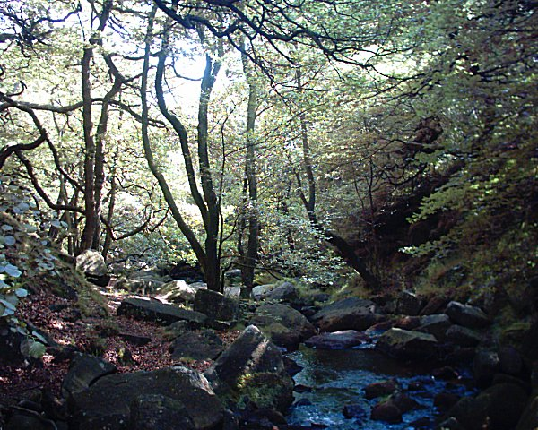 Fox Valley Park District Padley Gorge - Wikiped...