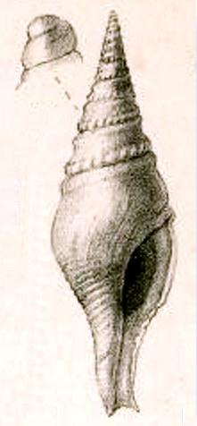 Perrona Fish