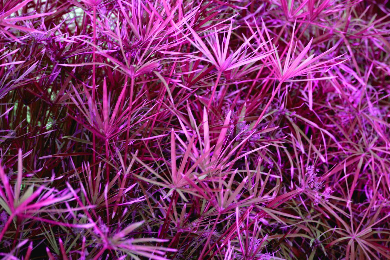 http://upload.wikimedia.org/wikipedia/commons/4/4e/Purple_flowers.jpg