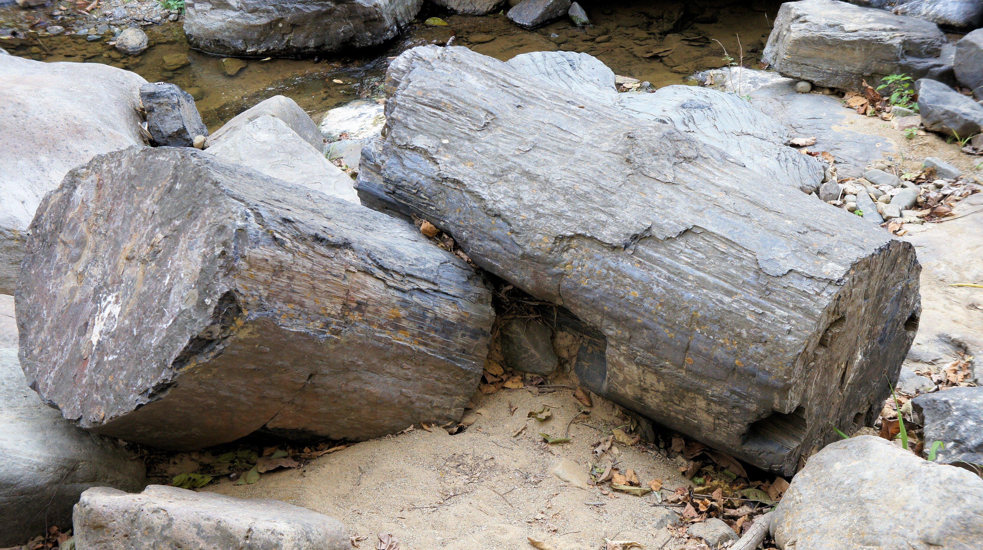 Petrified tree through rock layers dating 1