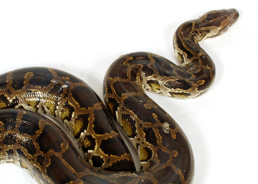 Python current date in Perth