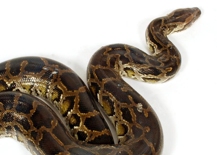 Python current date in Brisbane