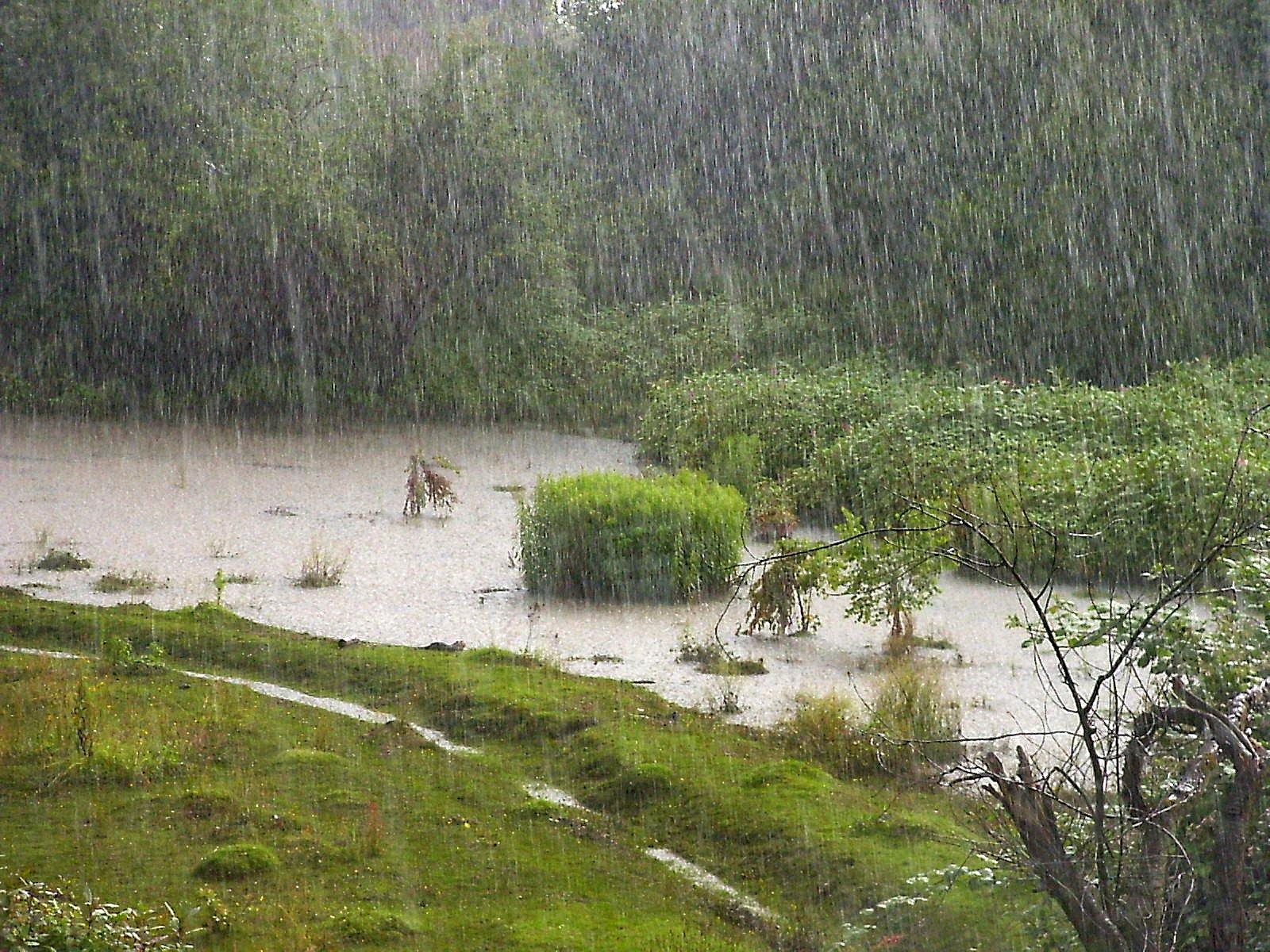 external image Rain_on_the_field.jpg
