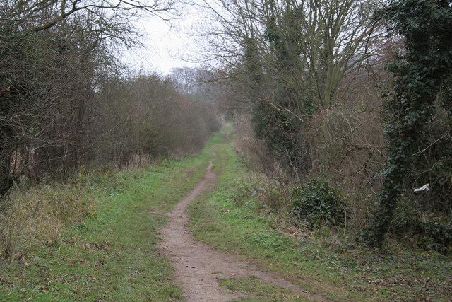 Roman Road, Gog Magog Hills - geograph.org.uk - 302978