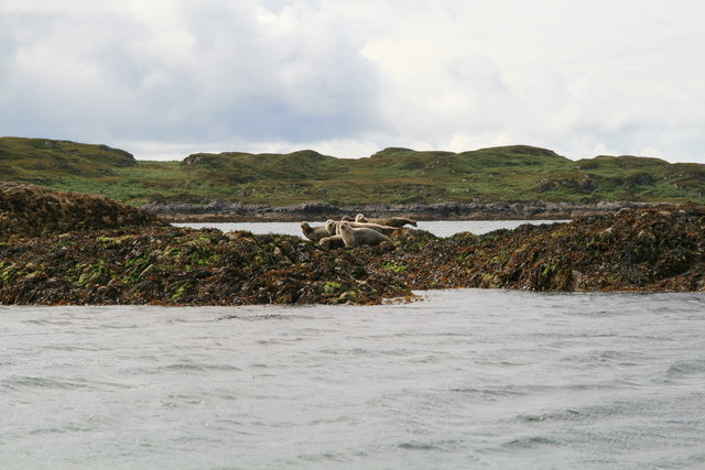 File:Seals on Arisaig Skerries - geograph.org.uk - 510392.jpg
