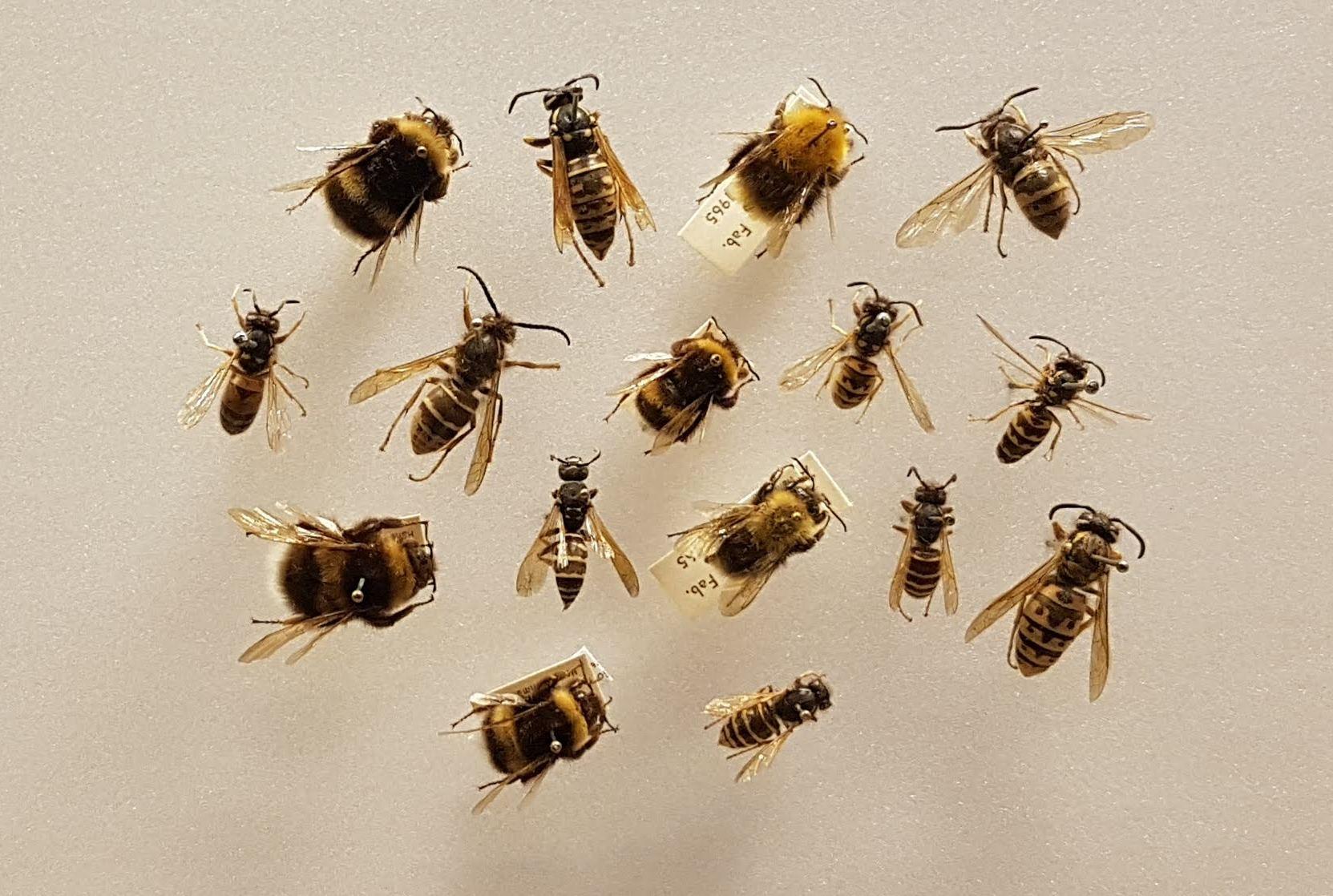 Bee - Wikipedia
