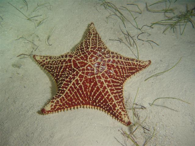http://upload.wikimedia.org/wikipedia/commons/4/4e/Starfish.JPG