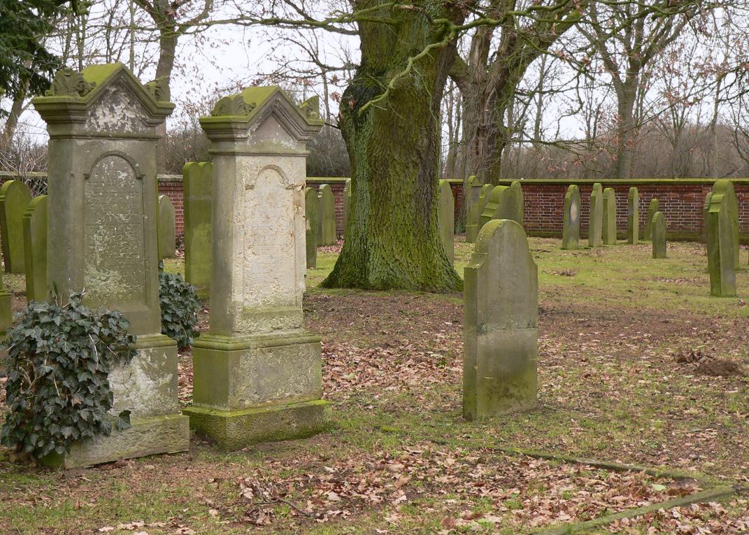 Stolzenau jüd Friedhof Baum.jpg