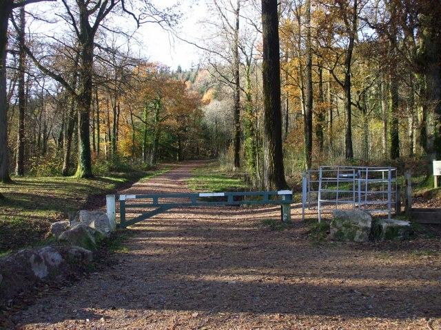 Track from car-park, Llwyn Celyn - geograph.org.uk - 1043268