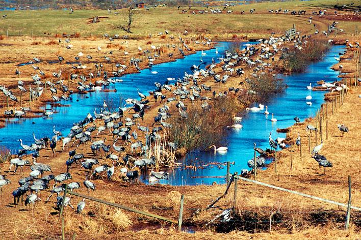 Bildresultat för hornborgarsjön
