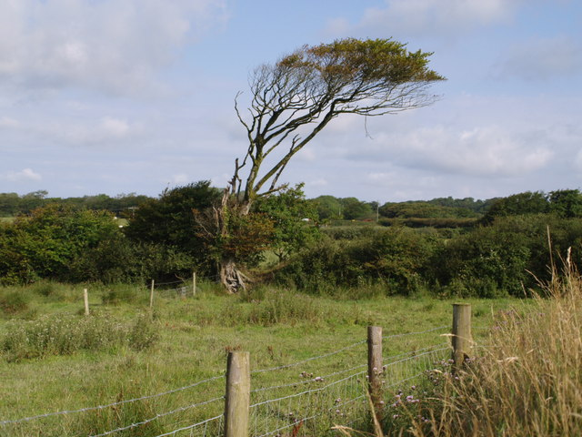 File:Tree near Worden - geograph.org.uk - 509405.jpg